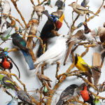 Royal Pavilion and Museums Brighton Bird collection