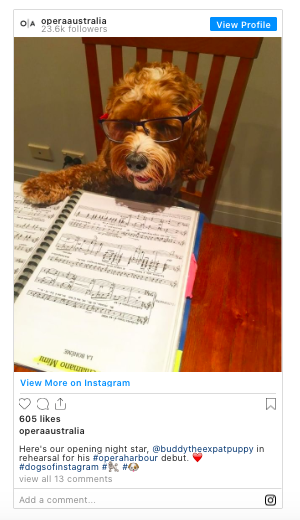 Dog sitting on a chair at a table with paw on music score
