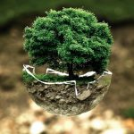 A tree grows from half a cracked egg shell