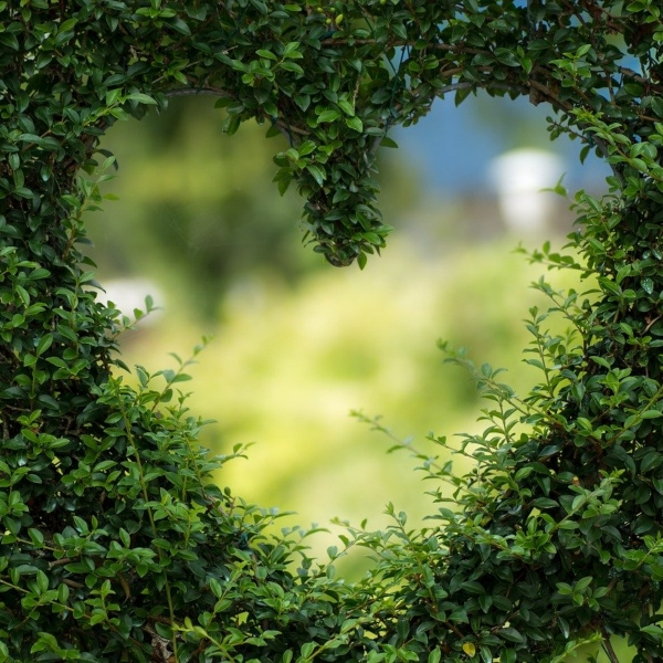 A leafy bush with a heart cut out that allows you to see the garden beyond