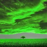A single tree in the background surrounded by grass. Overhead are ominous green clouds.
